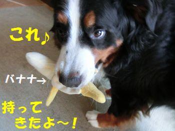 僕バナナ持って来た~!