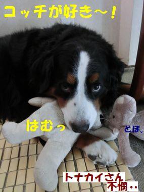 となかいさんよりわんこ!!