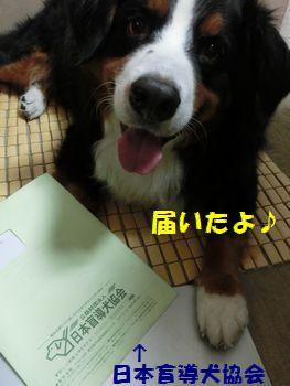 盲導犬協会からきたの!