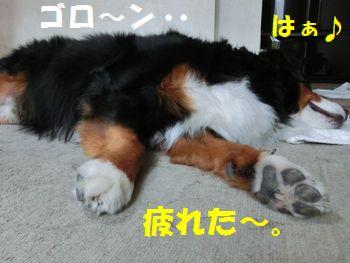 ゴロンってお休み~!!