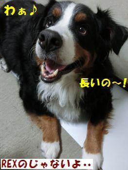 長いの長いの~!!