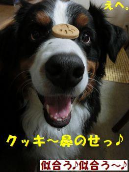 鼻のせ似合う~!!