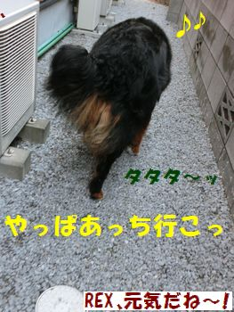 来たりすんの~!!