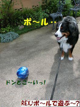 ボールかぁ・・・。