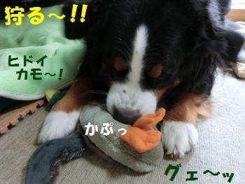 あっそぼうよ~!!