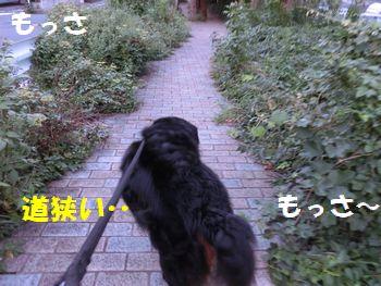 公園までの道がモッサモッサ~!!
