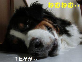 ひげなんて気にしな~い!