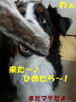 ひめたらきた~!!!