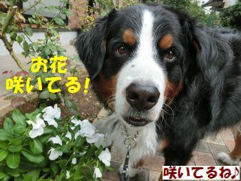 お花咲いてるよ~!!