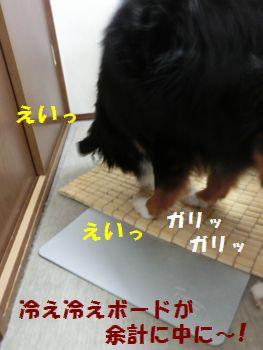 もう変なのこれ~!!