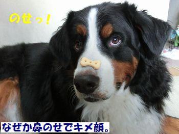 鼻のせなの~♪