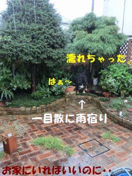 お外雨だった~!!