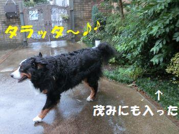 雨キライ嫌い~!!