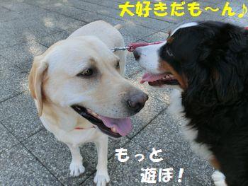 なかよしだよ!!