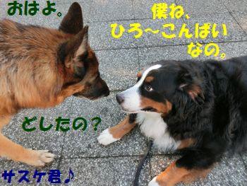 サスケ君、聞いて~!