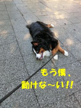 も~動けないの!!