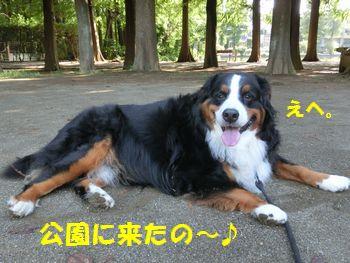 今日は気持ちがいいから公園さいこう~!!