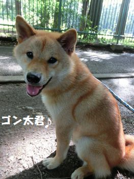 ゴンちゃんだ~!!