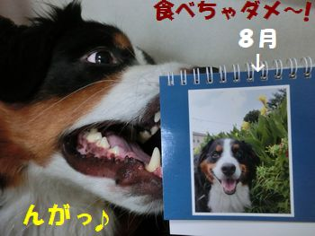 8がつの僕~!!