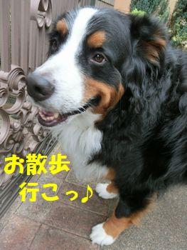 お散歩にいい気温!!