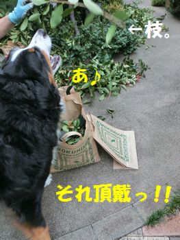 あ~!いいないいなそれ!!