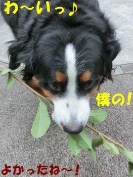 僕の枝枝~♪