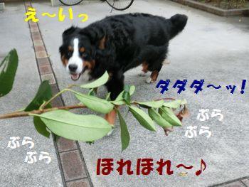 あの枝僕の~!!