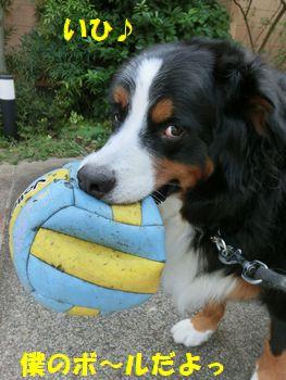 これは僕のボールなのっ!