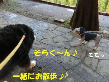 そら君と一緒に歩くの~!!