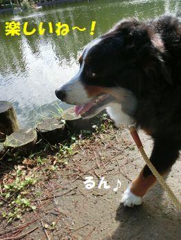 やっぱお散歩は晴れがい~ね!!