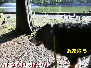 鳩さんもい~っぱい!!