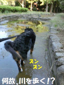川底歩くよ~。