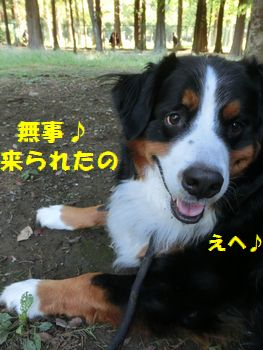 ぶじにここに来たの~!!