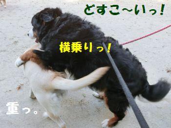 横乗り~!!