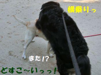 またまたどすこ~いっ!!!