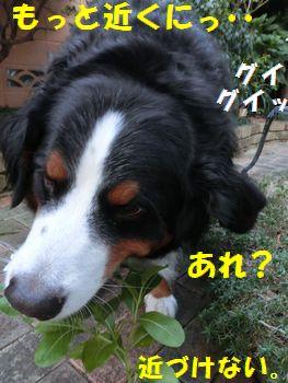 近く行けない~!!
