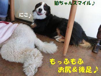 もふもふ最高~!!