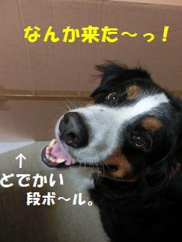 なんか来た~!僕のみたい!!
