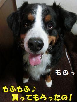 もふもふ生活なの~!!