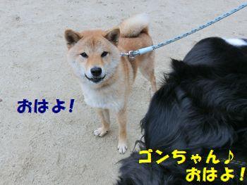 ゴンちゃんおはよ~う!