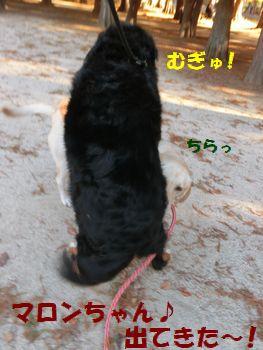 マロンちゃんと遊んでるんだよ~!