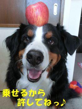 おリンゴ載せたよ~!