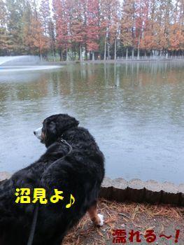 濡れても沼!!