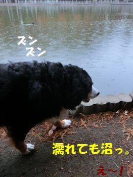 雨でも沼散歩だよっ!