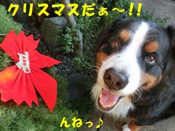 も~クリスマスなの!