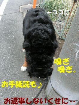 お手紙があったよ!!