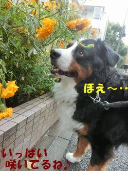 いっぱ~いお花咲いてるの。オレンジ??黄色??
