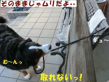 も~!取れない~!!