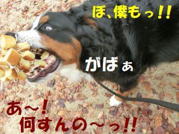 ライバル多し~!!!