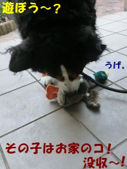 んじゃお庭でカモさんとも遊ぼ!